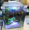 El mini tanque de cristal popular del acuario del tanque de pescados de Leecom hecho en China