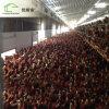 Chambre libre de ferme de poulet d'éleveur de grilleur de gamme