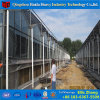きゅうりのための標準ガラス商業カバー物質的な温室