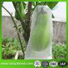 Завод растительных мешки, насекомых-Bag