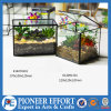 플랜트 홀더와 가정 장식을%s 유리제 Terrarium