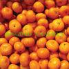 Mandarino fresco del miele