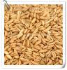 Graine d'avoine naturelle Beta Glucan / Avoine 10: 1 extrait de poudre