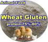 Animal Feed를 위한 밀 Protein Powder (75% 80%)