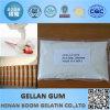 Hot Wholesale Bp Low Acyl/High Acyl Gellan Gum Powder