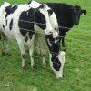 Rete fissa poco costosa del campo della protezione dell'azienda agricola di bestiame
