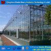 고추를 위한 상업적인 유리제 Hydroponic 온실