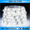 Cc12V 5050 LED SMD impermeables tira de luces.