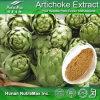 Выдержка Scolymus Cynara 100% естественная (Cynarin 5% кислота 5% 2.5% UV/HPLC хлорогеновая UV)