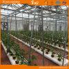水および肥料の統合を用いるプラスチックフィルムの温室