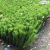 Künstlich/Synthetic Grass für Sports Court