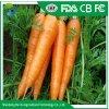 Prix de gros de carotte carottes// Les carottes fraîches pour la vente