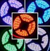 Cinta flexible de la luz de tira de IP65 SMD5050 LED LED