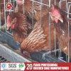 Дешевая клетка птицы оборудования цыплятины ячеистой сети машинного оборудования фермы