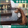 Madera de álamo Junta Combinada recubiertos con película laminada de madera contrachapada Marina