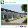 Invernadero comercial de la agricultura con la hoja de la PC