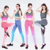 Gefärbtes Druck-Großverkauf-Frauen-Training Sports Yoga-Hosen-Eignung-Gamaschen