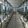 Los huesos de pescado tipo túnel Sala de ordeño de vaca Milker Auto