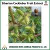 Extrait sibérien de poudre de fruit de Strumarium de Cocklebur/Xanthium d'approvisionnement d'usine