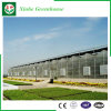 Weifang Xinhe Venlo Feuille de type PC Green House