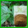 Natürlicher Pflanzenauszug-hornige Ziege Weed/Epimedium-Auszug/Epimedium Brm