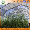 공장 판매 대리점 Po 필름 다중 경간 농업 온실