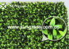 Grass artificiale Wall per Your Home Decoration (Wall Grass15)