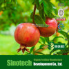 Fertilizzante del chelato del microelemento del EDDHA-Tecnico di assistenza 3.6 di Humizone