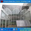 Estufa de vidro de Venlo com sistema hidropónico para o tomate