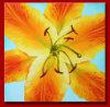 Peintures à l'huile de fleur de Reallictic