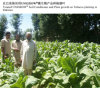Regulador del crecimiento vegetal