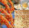 GMP 100% Natural Beabuckthorn selvagem Granular Beverage, Anticancer, Radiação Resistência, Anti-envelhecimento, Remover Chloasma, Whitening, Proteger o fígado Saúde alimentar