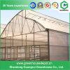 De LandbouwPC Behandelde Serre van uitstekende kwaliteit van de Zaagtand die in China wordt gemaakt