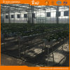 Agribusiness를 위한 높은 Quality 다중 Span Glass Greenhouse