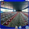 Camera d'acciaio dell'azienda agricola di pollo delle costruzioni d'acciaio prefabbricate fatta in Cina