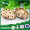 Saleのための新しいCrop Nutritions Fulvous Flower Mushroom