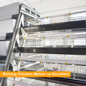 Tianrui A Type Automatic Poultry Farm Layer Cage Design pictures & photos