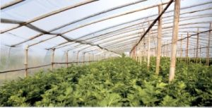 Agriculture PE Film for Greenhouse, Agriculture Film