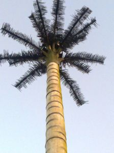 Camouflaged Palm Tree Telecom Tower