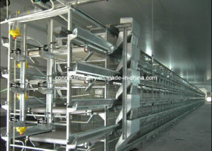 Poultry Cage for Layer