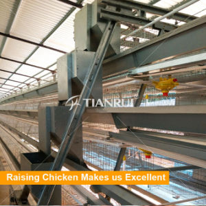 Automatic chicken raising equipment chicken cages for egg chickens A type pictures & photos