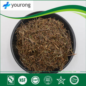 Wholesale Chinese Herb Extract Wholesale Chinese Herb Extract