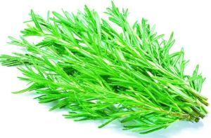 Ursolic Acid Rosemary Extract for Foods pictures & photos