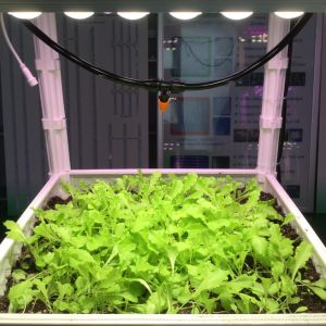 Waterproof IP67 LED Grow Light for Plant Factory pictures & photos