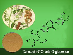 Calycosin-7-O-Beta-D-Glucoside