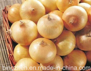 Chinese Fresh Onion, Red Onion, Yellow Onion pictures & photos
