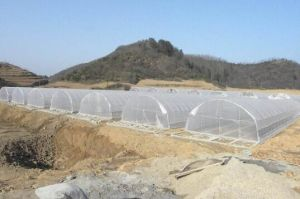 Hot Sale Multi Span Greenhouse with Quality Galvanized Steel Skeleton and Pep Anti Fogging Film for Agriculture pictures & photos