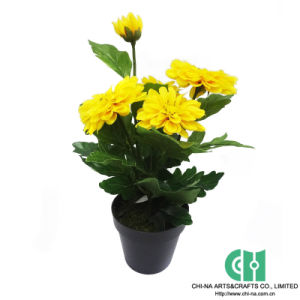 china zinnia in pot, chrysanthemum, bonsai, artificial flower