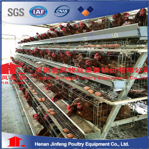 (JF2016) Layer Broiler Pullet Automatic Chicken Cage of Poultry Farm Equipment pictures & photos