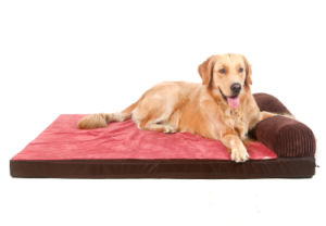Pet Mat and Pet Cushion Bed for Dog Pet House pictures & photos